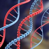 Variação genética pode ser responsável por cirrose em alcoolistas