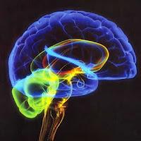 Beber demais pode encolher o cérebro